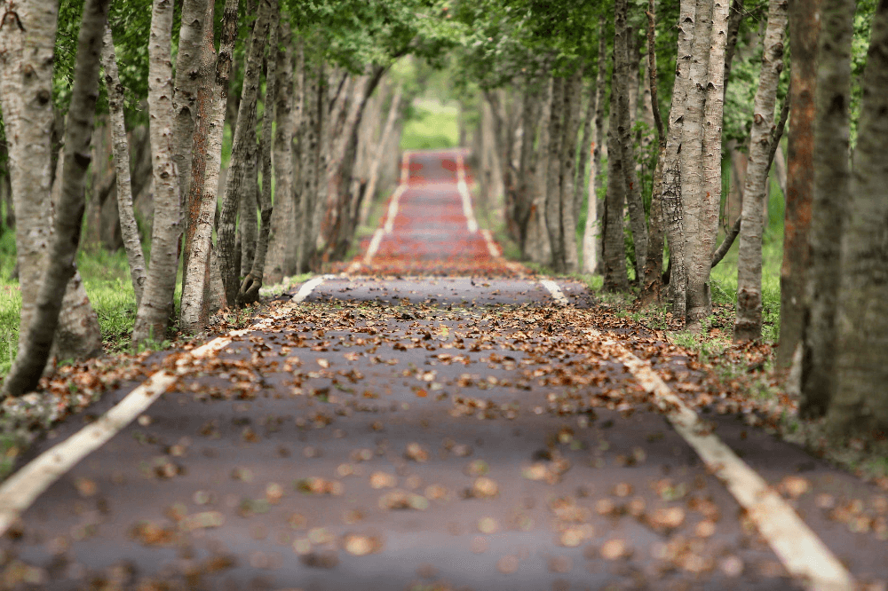 Empty road covered in leaves and lined with trees - long term nurture